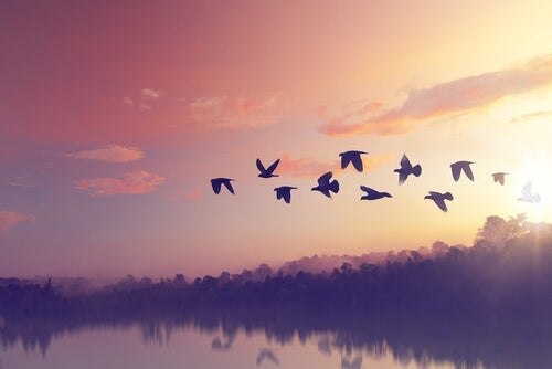 Birds flying by a lake.