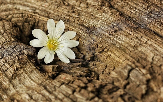 A flower in a trunk.