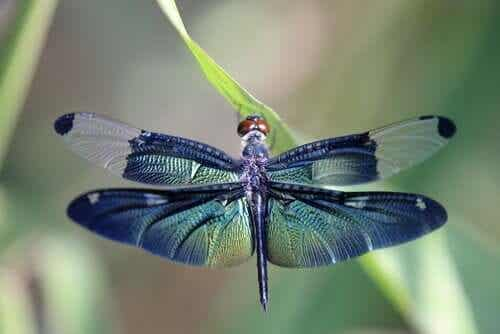 The Dragonfly Metaphor and Life Cycles
