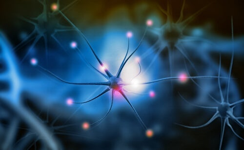 A close up of neurons.
