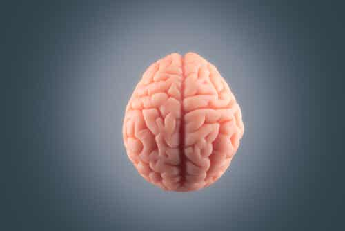 Why Is There so Much Fat in Our Brain?