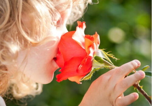 A child smelling a rose.