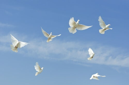Doves flying in the sky.