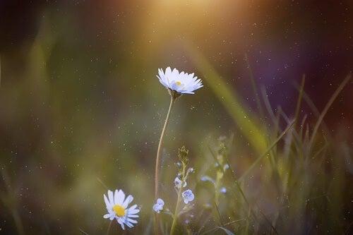 Some wild flowers.