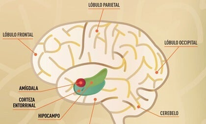 The Entorhinal Cortex and Memory