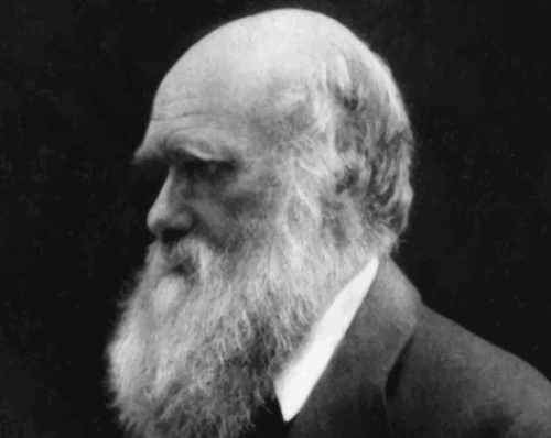 A picture of Charles Darwin.