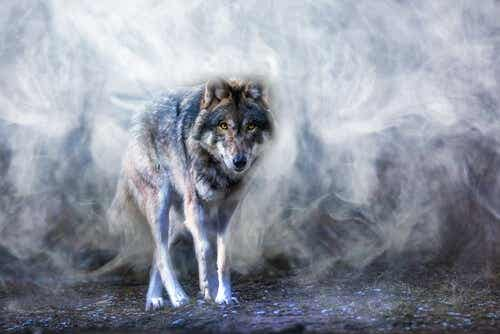 The Legend of the Astur Wolf and Balance