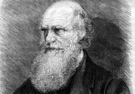A drawing of Charles Darwin.