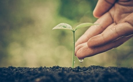 A seedling.