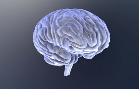 The image of a brain.