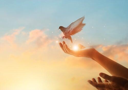 A person releasing a bird.