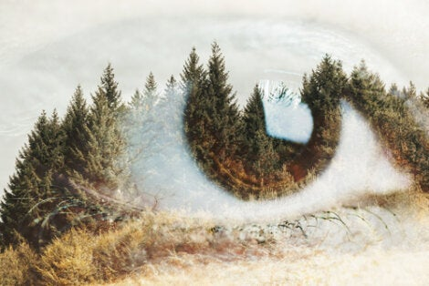 An eye overlaid on a pine landscape.
