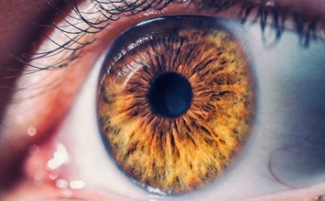 A close up of a brown eye.