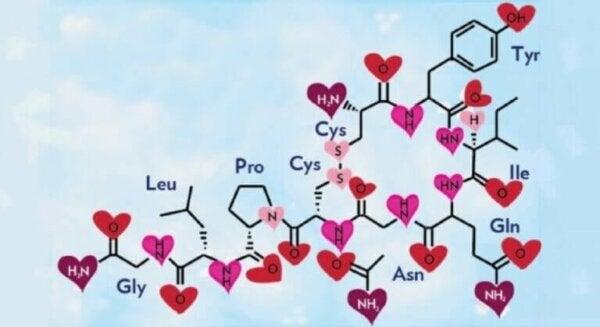 Oxytocin molecules.
