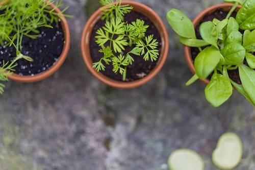 A few plants.