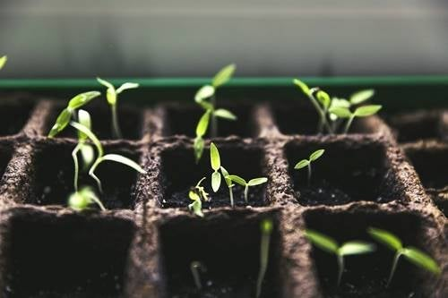 Gardening At Home: More Than a Trend