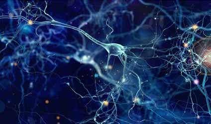 Von Economo Neurons: Functions and Characteristics