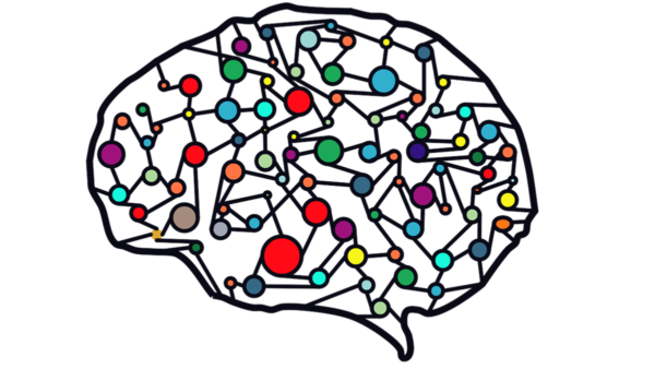 A brain with colors.