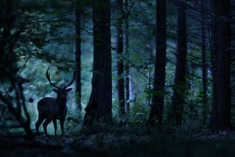 A deer in a forest.