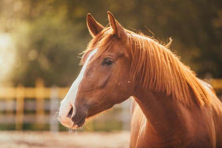 Fear of Horses or Hippophobia