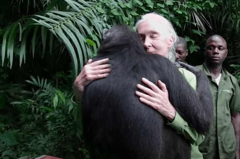 Jane Goodall and How She Became a Worldwide Expert and Activist
