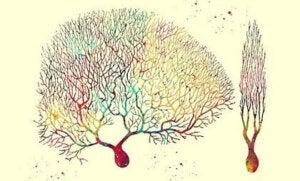 Purkinje Neurons: The Enigmatic Cells of the Cerebellar Cortex