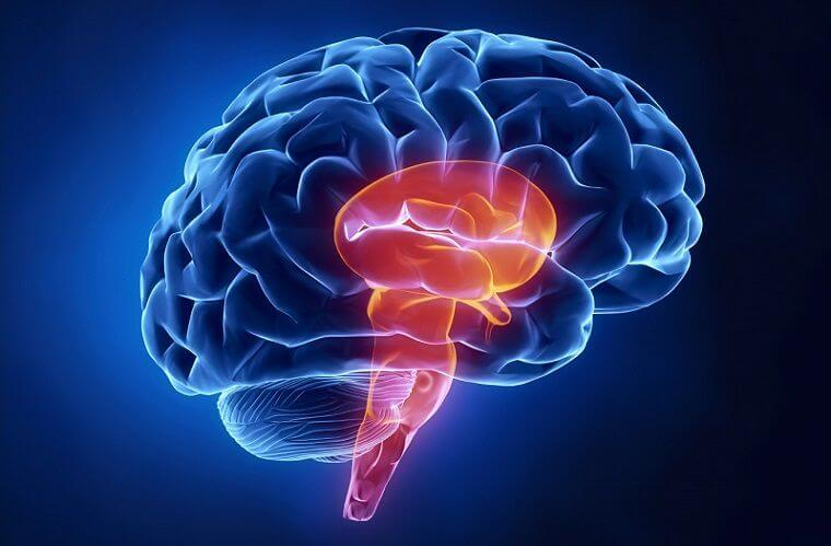The Human Brainstem: The Butterfly in the Brain