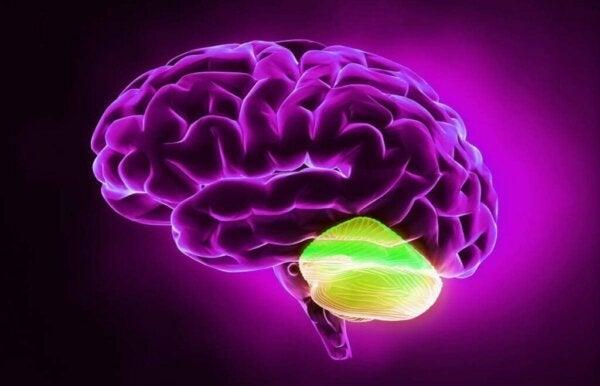 The Cerebellum and Divergent Thinking