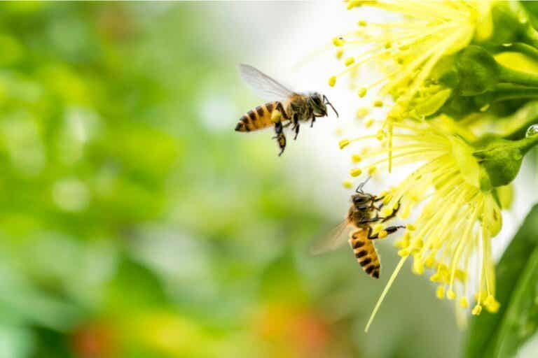 Symptoms of Apiphobia, the Fear of Bees