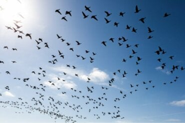 Three Ways to Overcome the Fear of Birds