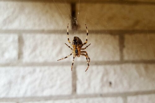 A spider spinning a web.
