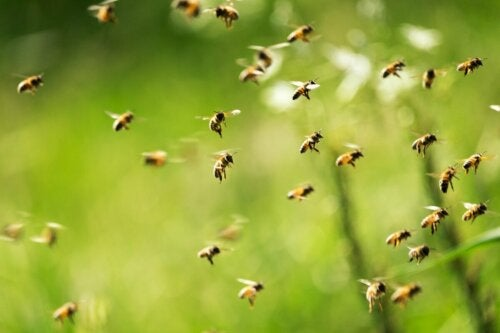 Many bees flying.