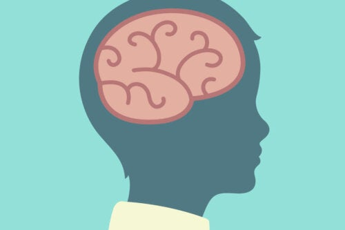 The brain of a child has a concrete operations stage.