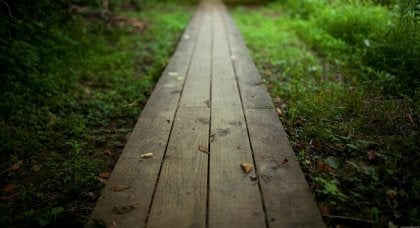 A path into the woods.