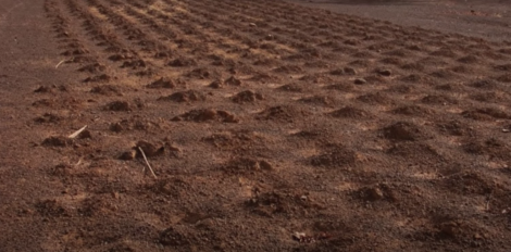 A field of planted soil.