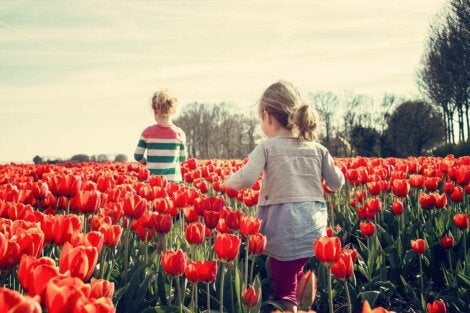 Two kids walking through a tulip field learning socio-emotional skills.