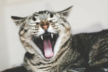 Causes and Treatment of Ailurophobia - Exploring your mind