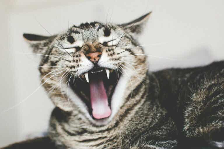 Causes and Treatment of Ailurophobia