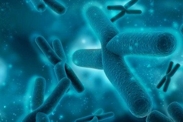 Some chromosomes.