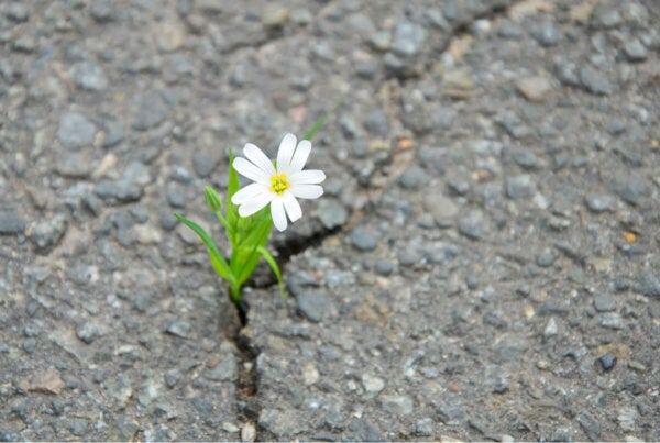 A flower growing on the road.