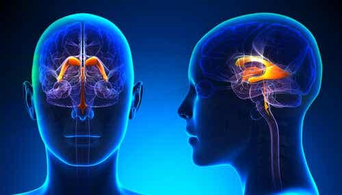 Characteristics of the Cerebral Ventricular System