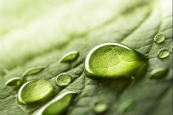 A magnified leaf.