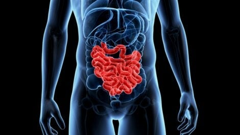 An image of someone's intestines.