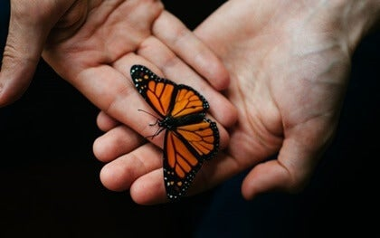 Two hands holding a butterfly.