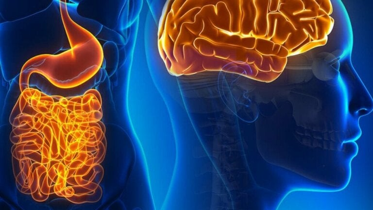 The Fascinating Life of Gut Neurons