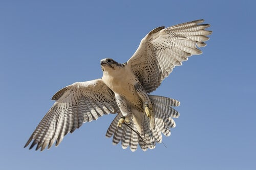 Zen Story: The Falcon that Couldn't Fly