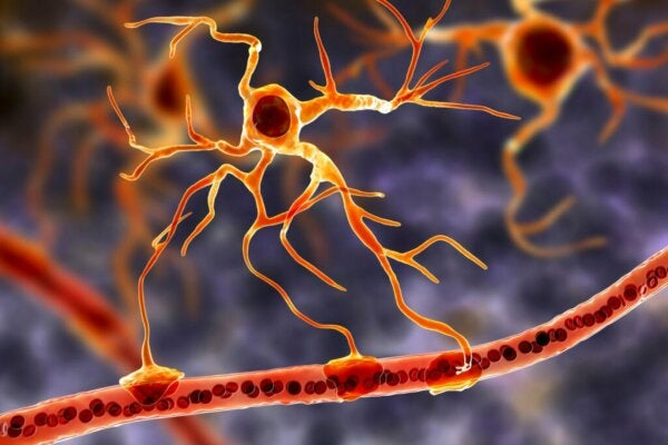 Glial Cells: The Functional Basis of the Brain