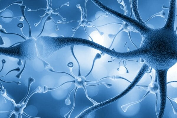 Several connected neurons.