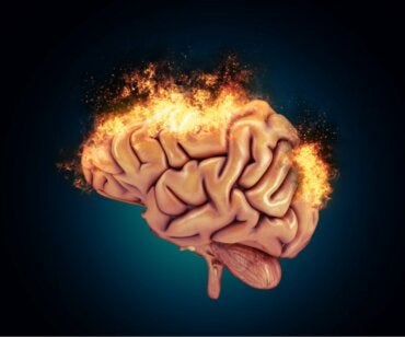 The Neurobiology of Aggressive Behavior