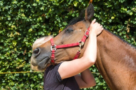 A woman doing equine therapy.